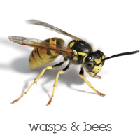 Wasps and Bees